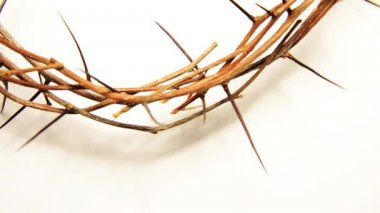 Crown of thorns on white — Wideo stockowe