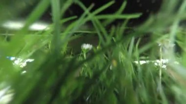Lawn mowing grass — Stock Video