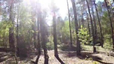 Riding through the woods at sunny day low-angle shot — Stock Video