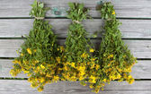 Herb St. John's wort tied in bunches for drying. — Stock Photo