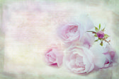 Pink rose .Textured conceptual image. — Stock Photo