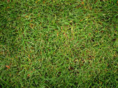 Grass — Fotografia Stock