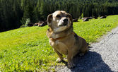 Vacancy dog — Stock Photo