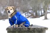 Hund und Schnee — Stockfoto