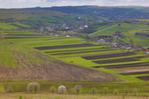 Beautiful green landscape fields in spring time under clouded sk — Stock Photo
