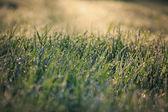 Early morning, sunlight morning dew — Stock Photo