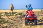 Boys riding a quad and filming the lonely pasturing animal on th — Stock Photo