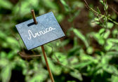 Arnica name board fastened on a stick in the garden — Stock Photo