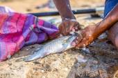 Closeup to fisher's hands cleaning the fresh fish — Foto de Stock