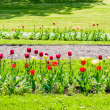 Beautiful arranged tulips on the side of the road — Stock Photo #52816005