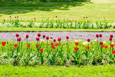 Beautiful arranged tulips on the side of the road — Stock Photo