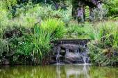 A small pond with a waterfall surrounded with greenery — Стоковое фото