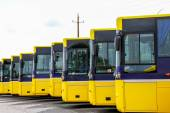 Big yellow buses parked in a line — Stock Photo