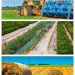 Collage mix of  farming and gardening in countryside — Stock Photo #55623079