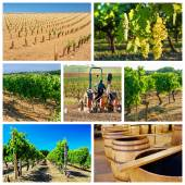 Collage about vineyard and wine industry — Stock Photo