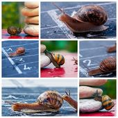 Snail business metaphor — Stockfoto