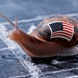 Finish line winning of a snail with the colors of Usa flag — Stock Photo #58093013