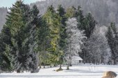Winter landscape of Forest in Vosges mountain, France — Stockfoto