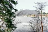 Closeup on conifer with frozen lake in background — Stockfoto