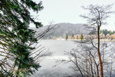 Closeup on conifer with frozen lake in background — Zdjęcie stockowe
