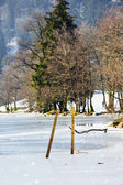 Closeup on conifer with frozen lake in foreground — Stock Photo