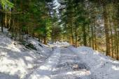 Landscape of Forest in Vosges mountain, France — 图库照片
