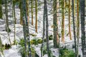 Landscape of Forest in Vosges mountain, France — Zdjęcie stockowe