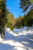 Landscape of Forest in Vosges mountain, France — Foto Stock