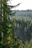 Landscape of Forest in Vosges mountain, France — Foto de Stock