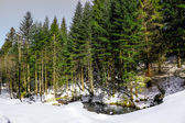 Winter landscape of Forest in Vosges mountain, France — Foto Stock