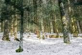 Landscape of Forest in Vosges mountain, France — Stockfoto