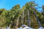 Landscape of Forest in Vosges mountain, France — Stock Photo
