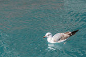 Seagull in green water on Canal of venice — Stockfoto
