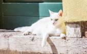 White beautiful cat siting at the foot of a door — Stock Photo