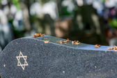 Jewish cemetery: Star of David on the tombstone — Stock Photo