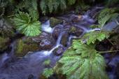 Thermal springs in national park Villarica, Chile — Stock Photo