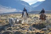 EL CHALTEN, MOUNT FITZ ROY, ARGENTINA - APRIL 16: Gaucho against — Stock Photo