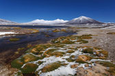 Green Lagoon (Laguna Verde) on the border of Argentina and Chile — Stock Photo