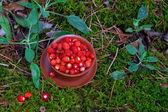 Wild strawberries on moss — Stock Photo