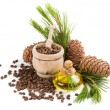 Oil, nuts and cones of cedar tree — Stock Photo #77684220