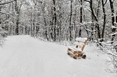 Winter forest. Wooden bench on a snowy road. — Stock Photo