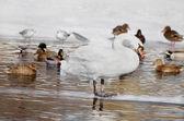 Zimove birds in city park — Foto Stock