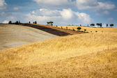 Grain filed in Tuscany — Stock Photo