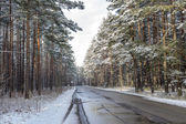 Forest road on a cloudy winter day — Stock Photo