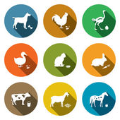 Pets, animals  icons collection — Stock Vector