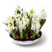 Pot of Tulips view — Stock Photo