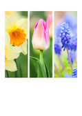 Collage of spring flowers — Stock Photo