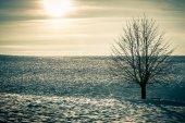 Winter boom — Stockfoto