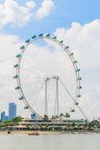 сингапурский летчик — Стоковое фото
