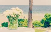 美丽的花,插在花瓶里 — 图库照片